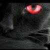 View theblkcat's Profile