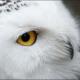 owlasea