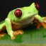frog65