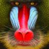 Monkeybrother