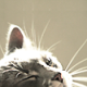 Profile picture of Matilde