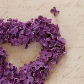 山紫sanshi