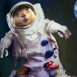 Space Squirrel