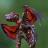 VenomousGecko