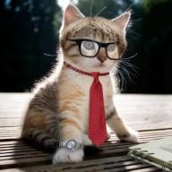 The Kitty Gamer