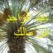 Avatar of عبد الواحد بن مالك