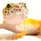 View LeopardGecko's Profile