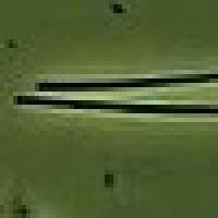 gravatar for prochlorothrix