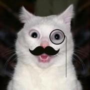 catplusplus