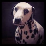 capitano95