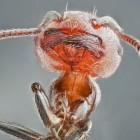 View Entomo's Profile
