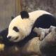 HongdongDonald's avatar
