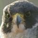 fighting_falcon93