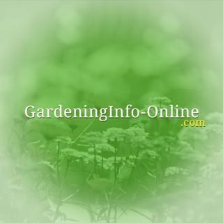 Gardening Info Online