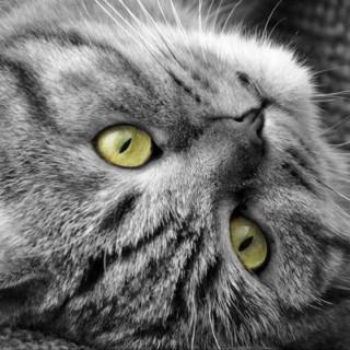 finjaskatzenwelten