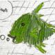 netzfisch