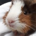 Photo of Pearlia