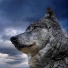 View doggod101's Profile