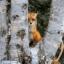 foxglovemeadows