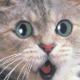 terry92270