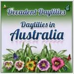 Daylilies123