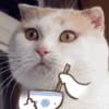 xdcatss's Photo