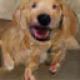 charlie @ doginvestor.com