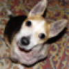 Dimkz avatar