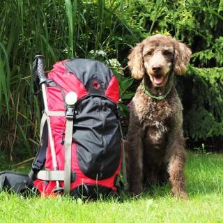 Anwolf - Unterwegs auch mit Hund