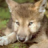 Profilbildet til Den Lille Snille Ulven