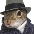 FancySquirrel