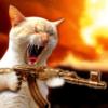superloadedcat's Photo