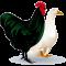 poultrymatters