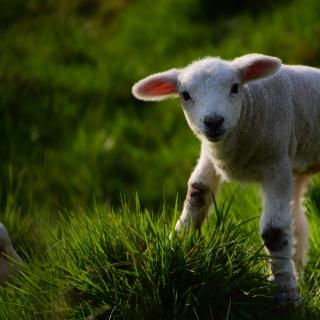 tinyadventure