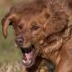 odriew's avatar
