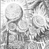 Please help Find a manga - last post by hidayato