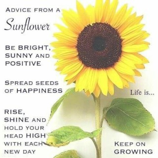 ♥ Sunflower ♥