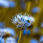 Filip Sutkowy