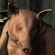 Doty, Timothy T's avatar