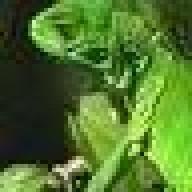 lizardmarsh