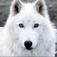 whitewolf68