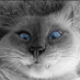Alexandria13's avatar