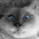 druscylla77798's avatar
