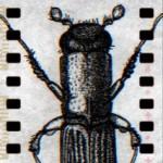 avatar for John Furlong