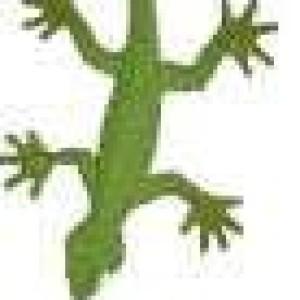 Avatar of gecko