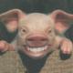 Profile photo of dubya1337