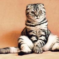 felines are superior