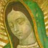 vaticanocatolico
