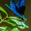 Avatar chrystele claude giraud