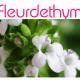 Fleurdethym
